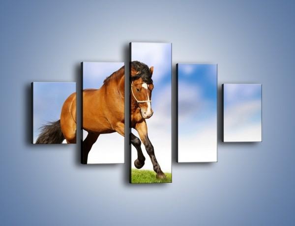 Obraz na płótnie – Przejażdżka na brązowym koniu – pięcioczęściowy Z064W1