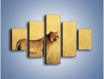 Obraz na płótnie – Czujny wzrok lwicy – pięcioczęściowy Z091W1