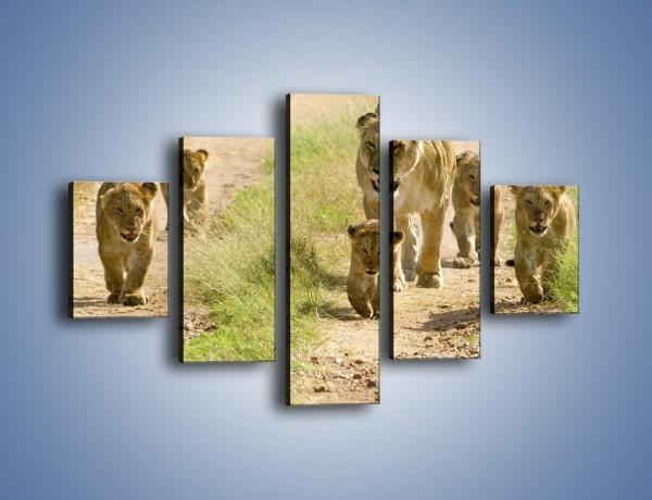 Obraz na płótnie – Spacer z małymi lwiątkami – pięcioczęściowy Z112W1