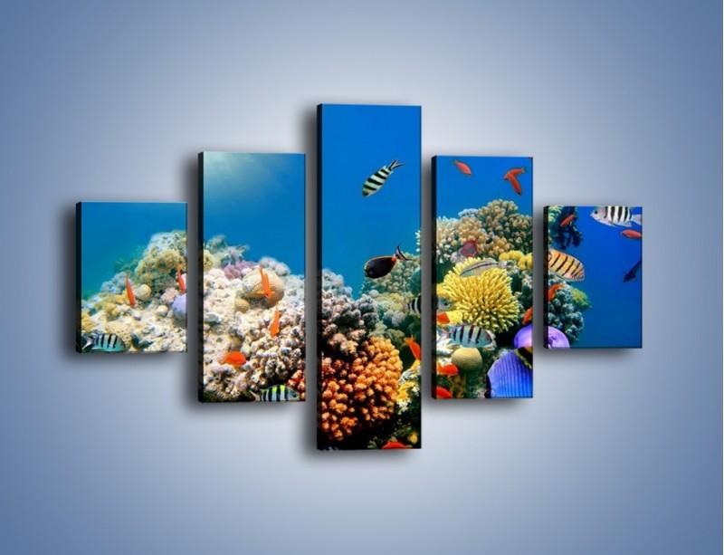 Obraz na płótnie – Fauna i kolorowi towarzysze – pięcioczęściowy Z116W1