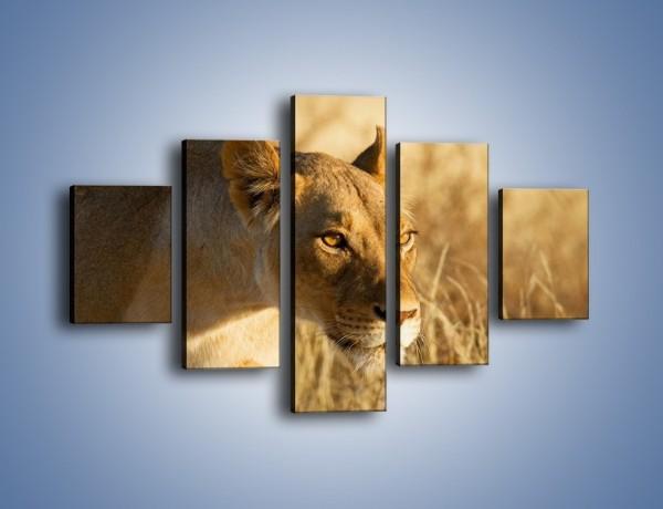 Obraz na płótnie – Polowanie z lwicą – pięcioczęściowy Z132W1