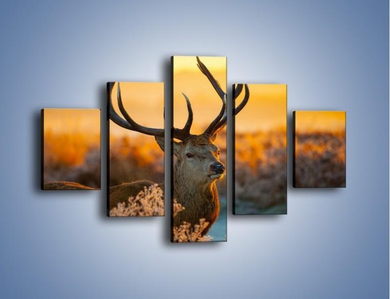 Obraz na płótnie – Ciężkie poroże jelenia – pięcioczęściowy Z165W1