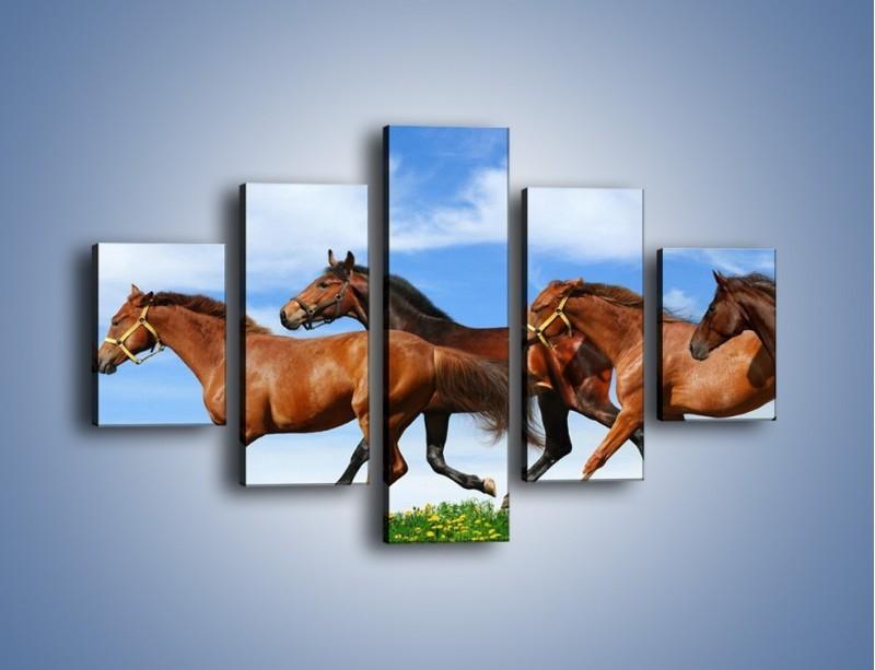 Obraz na płótnie – Galopujące stado brązowych koni – pięcioczęściowy Z172W1