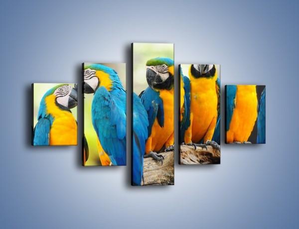 Obraz na płótnie – Pocałunek kolorowej papugi – pięcioczęściowy Z187W1
