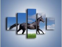 Obraz na płótnie – Dziki koń w biegu – pięcioczęściowy Z194W1
