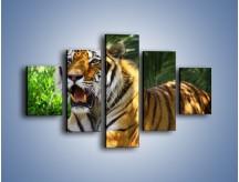 Obraz na płótnie – Cała duma tygrysa – pięcioczęściowy Z199W1