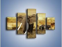 Obraz na płótnie – Drogocenne kły słonia – pięcioczęściowy Z214W1