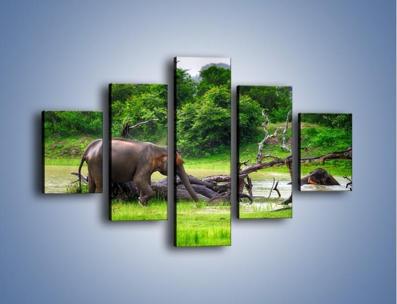 Obraz na płótnie – Kąpiel ze słoniem – pięcioczęściowy Z216W1