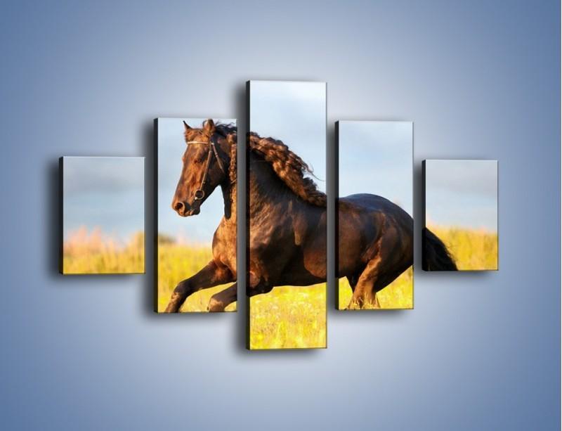 Obraz na płótnie – Dziki koń i jego mięśnie – pięcioczęściowy Z232W1