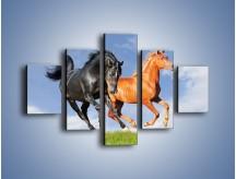 Obraz na płótnie – Czarny rudy i koń – pięcioczęściowy Z241W1
