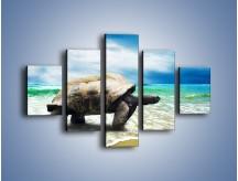 Obraz na płótnie – Jak tu nie kochać żółwi – pięcioczęściowy Z251W1