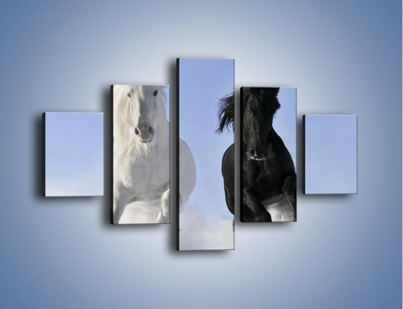 Obraz na płótnie – Czarno-biały wyścig konny – pięcioczęściowy Z263W1