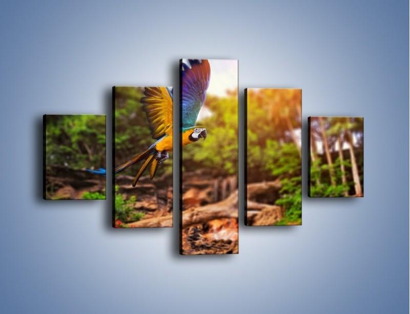 Obraz na płótnie – Kolorowa papuga w locie – pięcioczęściowy Z280W1