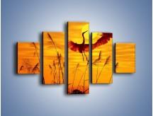 Obraz na płótnie – Czaple i zachód słońca – pięcioczęściowy Z302W1