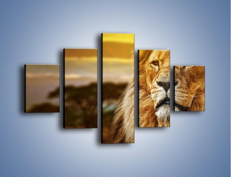 Obraz na płótnie – Dojrzały wiek lwa – pięcioczęściowy Z303W1