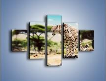 Obraz na płótnie – Cała zwinność geparda – pięcioczęściowy Z315W1
