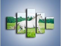Obraz na płótnie – Biały koń i leśna polana – pięcioczęściowy Z317W1