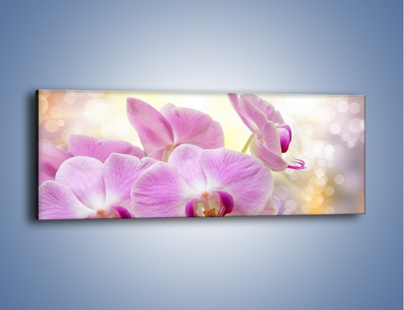 Obraz na płótnie – Lila kwiaty o poranku – jednoczęściowy panoramiczny K976