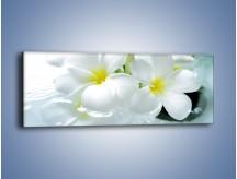 Obraz na płótnie – Białe kwiaty w potoku – jednoczęściowy panoramiczny K991