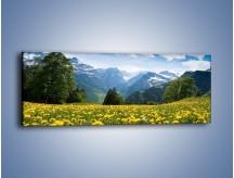 Obraz na płótnie – Łąka mleczy w górach – jednoczęściowy panoramiczny KN008
