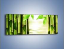 Obraz na płótnie – Bambusowe liście i łodygi – jednoczęściowy panoramiczny KN027