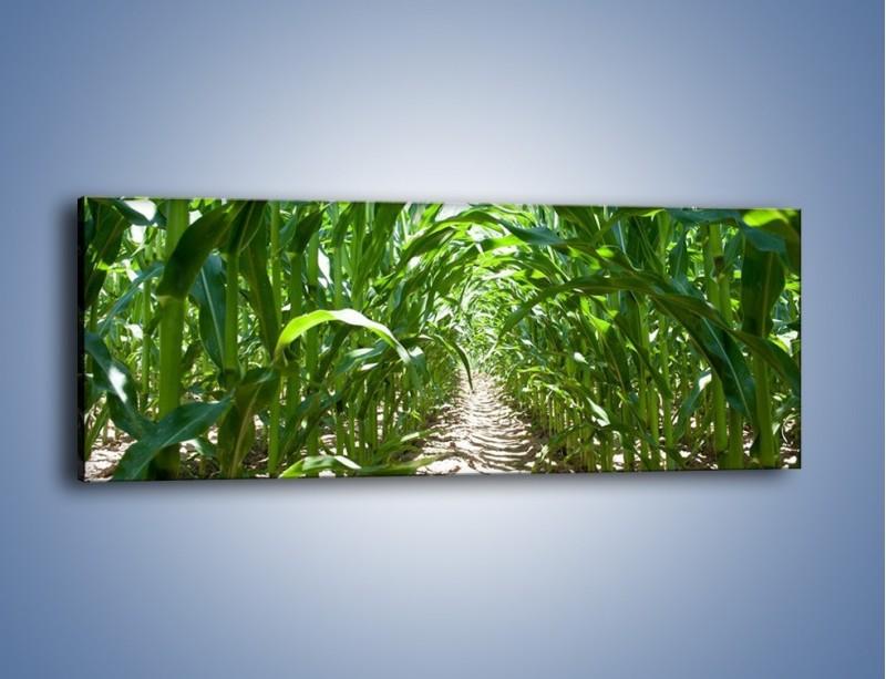 Obraz na płótnie – Labirynt z łodyg – jednoczęściowy panoramiczny KN036
