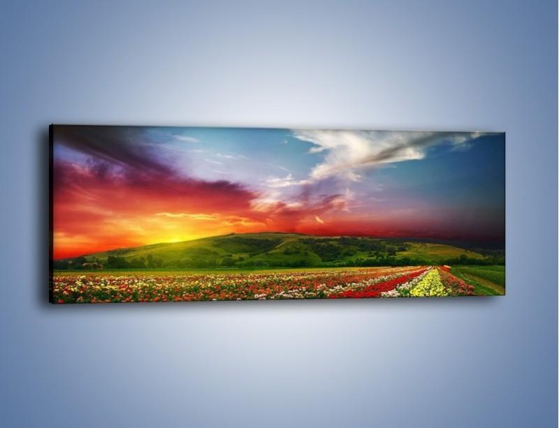 Obraz na płótnie – Uprawy kolorowych róż – jednoczęściowy panoramiczny KN060