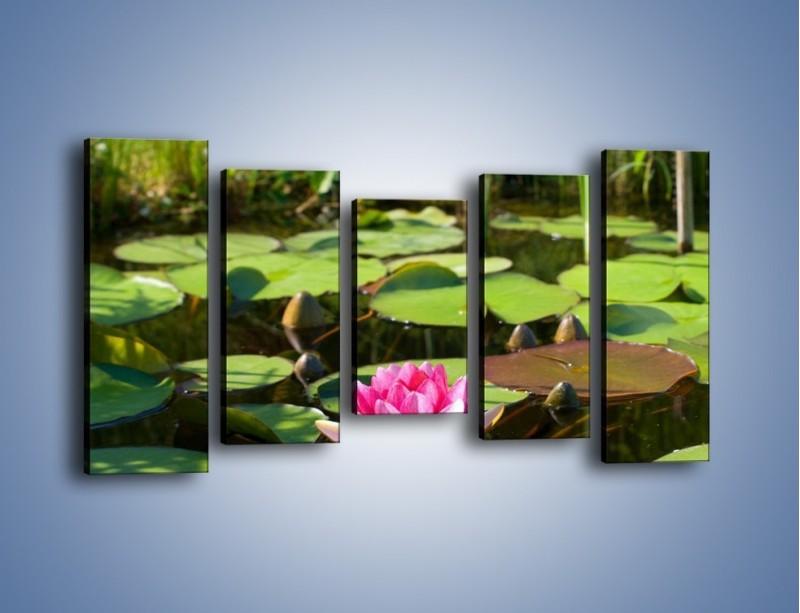 Obraz na płótnie – Ciemno-różowy nenufar na wodzie – pięcioczęściowy K014W2