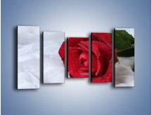 Obraz na płótnie – Bordowa róża na białej pościeli – pięcioczęściowy K1023W2