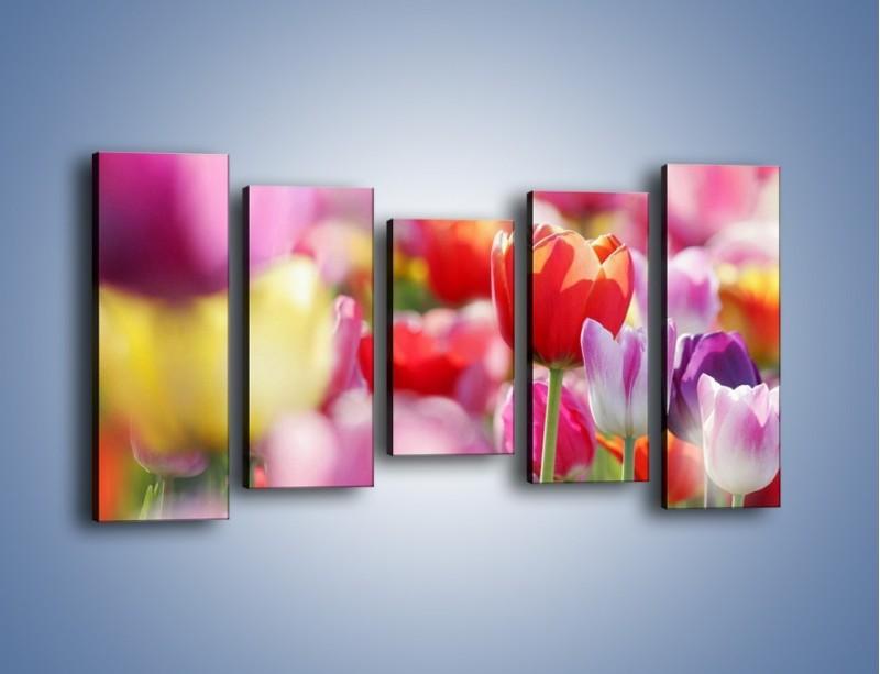 Obraz na płótnie – Boso przez tulipany – pięcioczęściowy K344W2