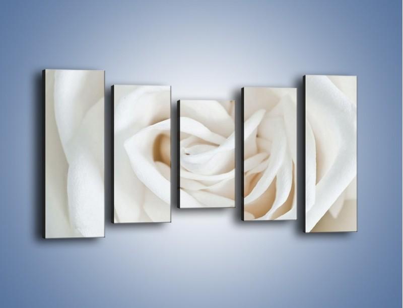 Obraz na płótnie – Biel róży za dnia – pięcioczęściowy K709W2