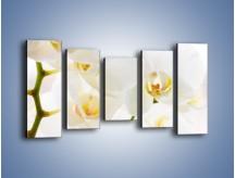 Obraz na płótnie – Białe storczyki blisko siebie – pięcioczęściowy K811W2
