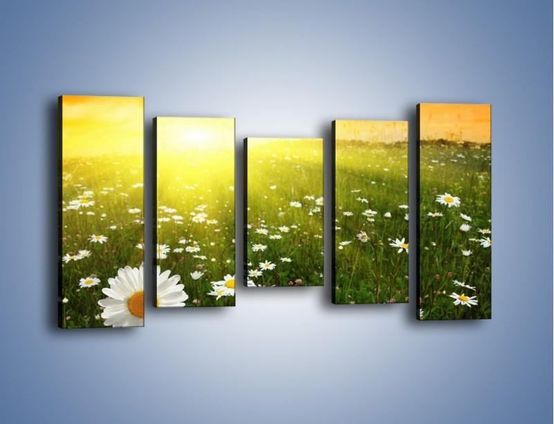 Obraz na płótnie – Łąka stokrotek o zachodzie słońca – pięcioczęściowy KN009W2