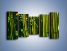 Obraz na płótnie – Bambusowe łodygi z bliska – pięcioczęściowy KN118W2