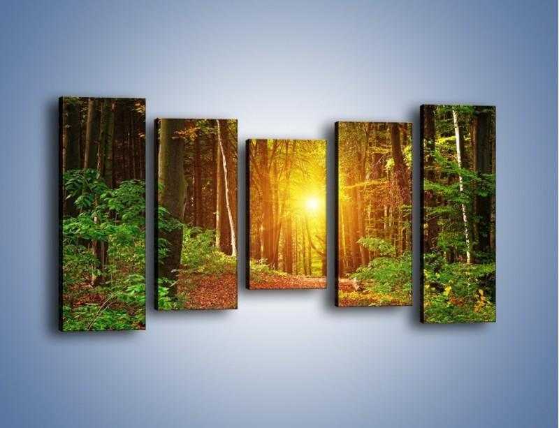 Obraz na płótnie – Polski krajobraz leśny – pięcioczęściowy KN1257AW2