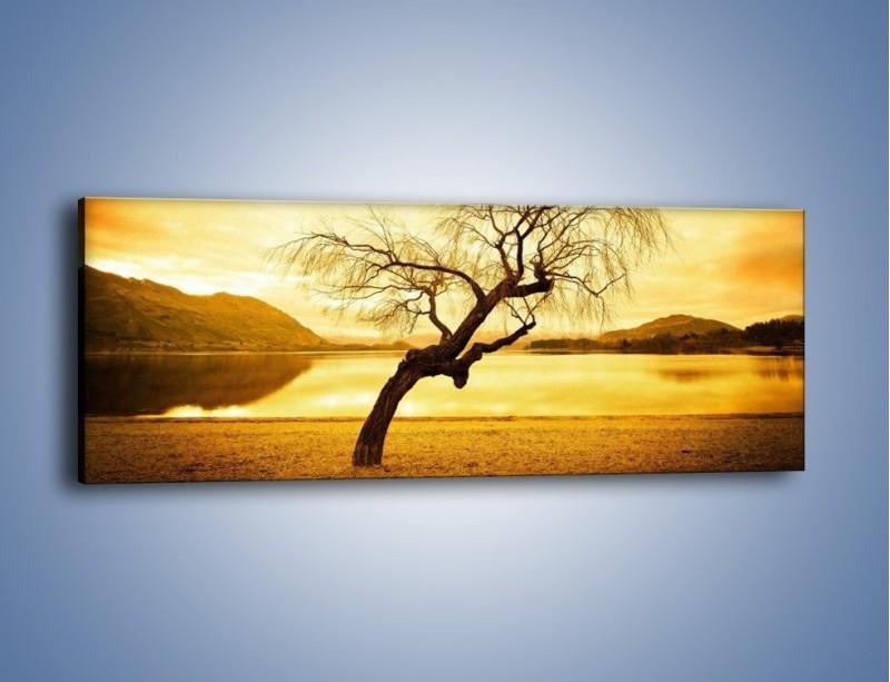 Obraz na płótnie – Pochylone drzewo w sepii – jednoczęściowy panoramiczny KN1033