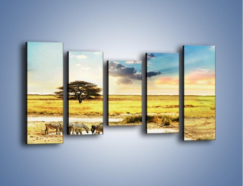 Obraz na płótnie – Zebry na sawannie – pięcioczęściowy KN1298AW2