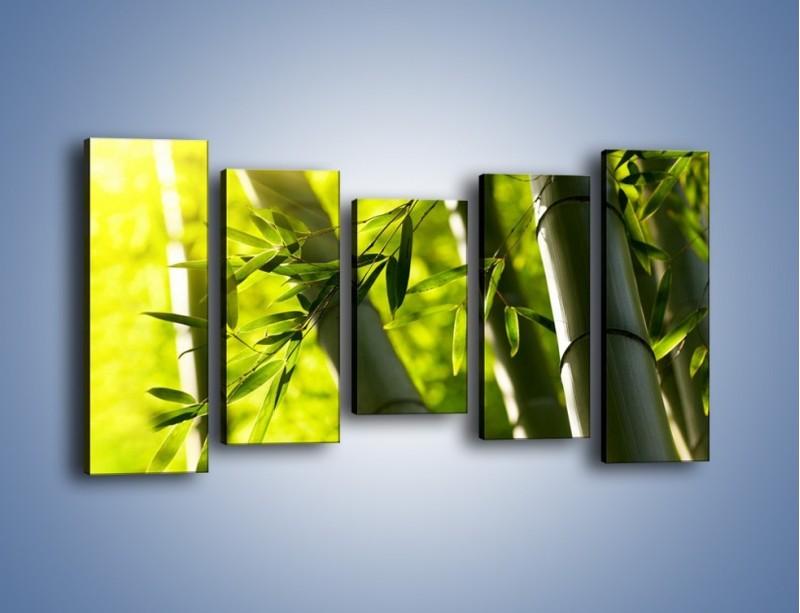 Obraz na płótnie – Twarde łodygi bambusa – pięcioczęściowy KN1314AW2