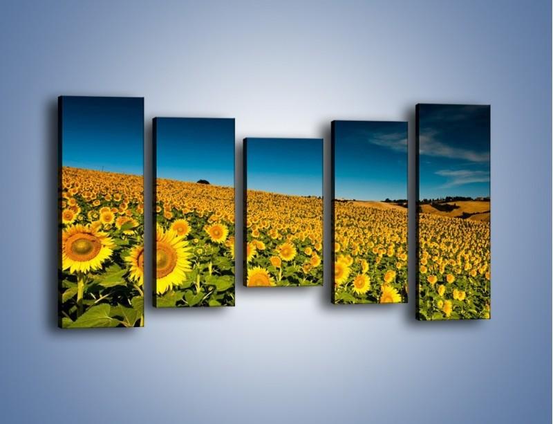 Obraz na płótnie – Słonecznikowe uśmiechnięte główki – pięcioczęściowy KN205W2