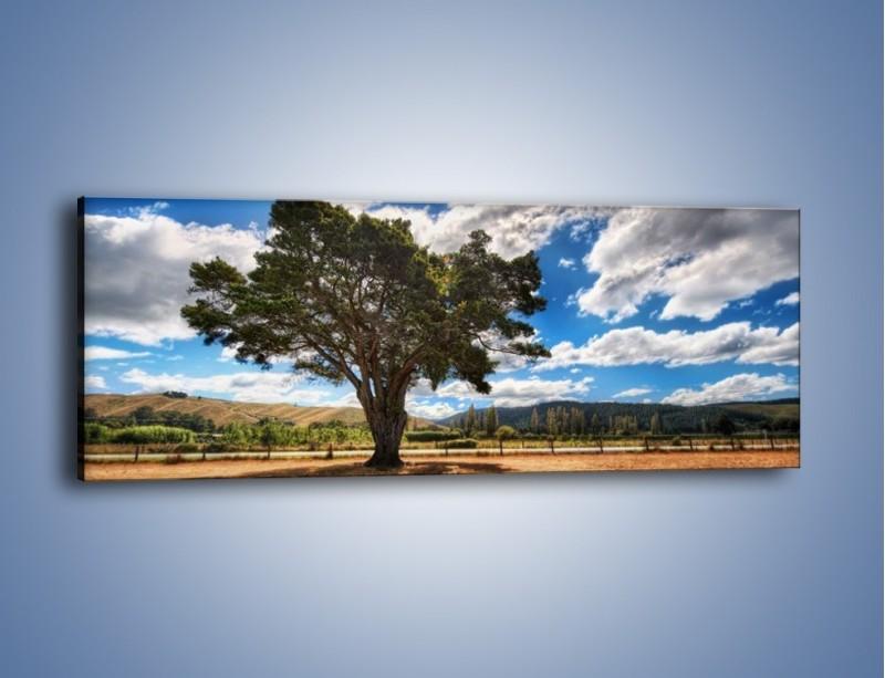 Obraz na płótnie – Cień pod rozłożystym drzewem – jednoczęściowy panoramiczny KN1037