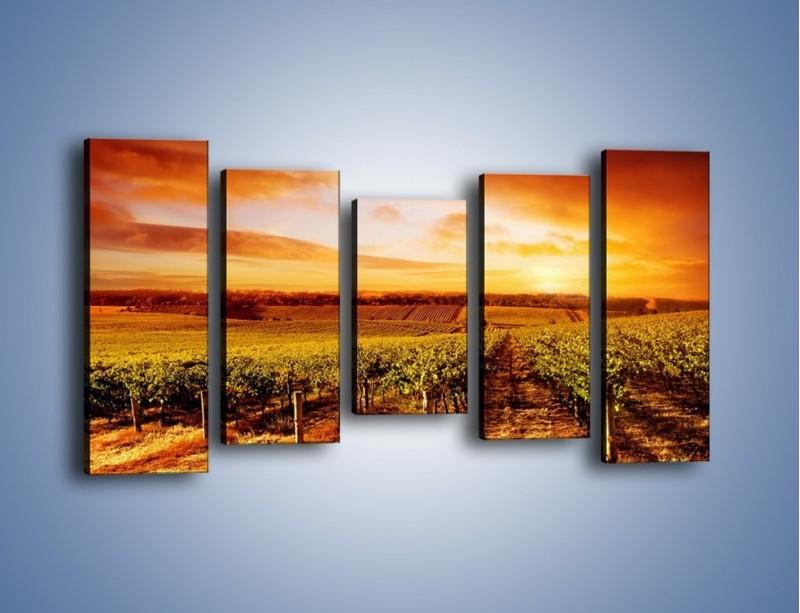 Obraz na płótnie – Ziemia i uprawy – pięcioczęściowy KN673W2