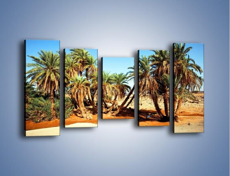 Obraz na płótnie – Palmowa rodzina w komplecie – pięcioczęściowy KN809W2