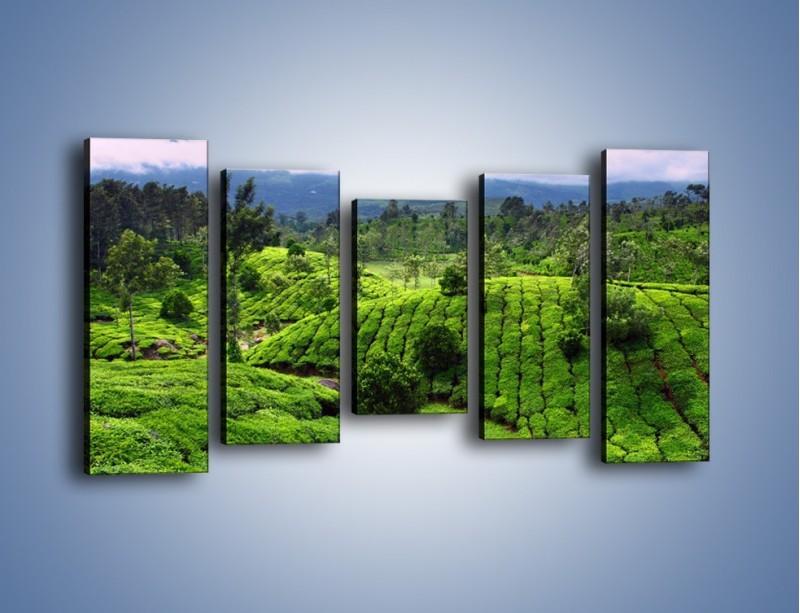Obraz na płótnie – Rozległa zielona kraina – pięcioczęściowy KN872W2