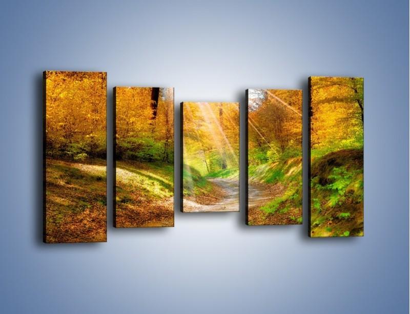 Obraz na płótnie – Promienną i słoneczną ścieżką przez las – pięcioczęściowy KN989W2