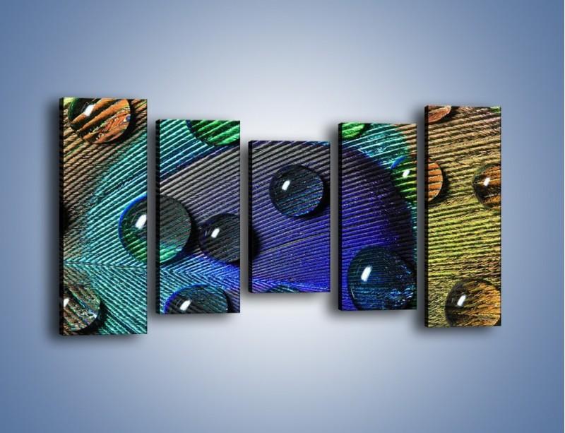 Obraz na płótnie – Kropelki na pawim oku – pięcioczęściowy O047W2