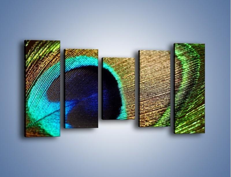 Obraz na płótnie – Cudowne pawie oko – pięcioczęściowy O048W2