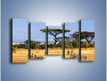 Obraz na płótnie – Antylopy w słonecznej afryce – pięcioczęściowy Z003W2