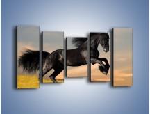 Obraz na płótnie – Czarny koń w galopie – pięcioczęściowy Z008W2