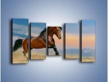Obraz na płótnie – Brązowy koń na pustyni – pięcioczęściowy Z011W2