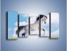 Obraz na płótnie – Białe obłoki i koń – pięcioczęściowy Z019W2
